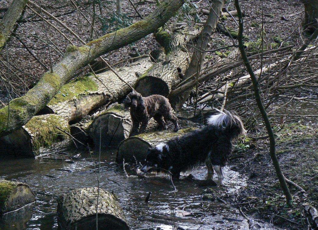 Dog Walking Water Fun Photo S In Glasgow