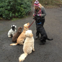 Dog Walking Photo S From Paws On Glasgow